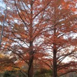 Beautiful leaves changing colors